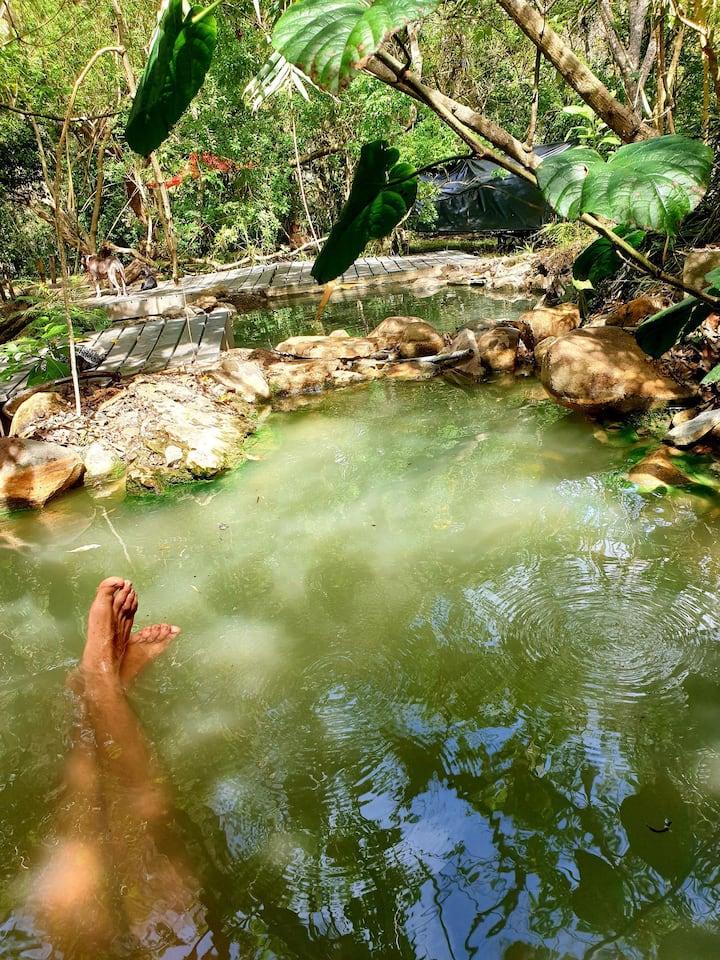 Hot Springs Hut!