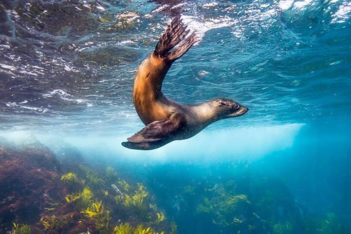 Cannot Miss The Seals At Narooma