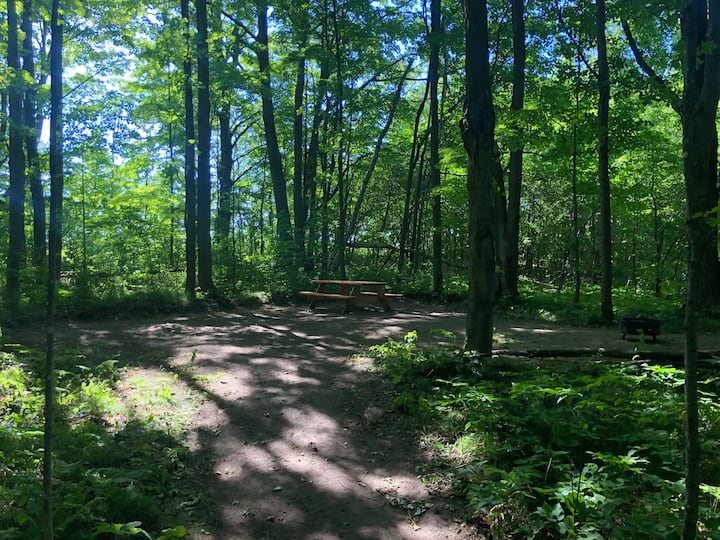 Forested Farmland Campsite (#2 of 2)