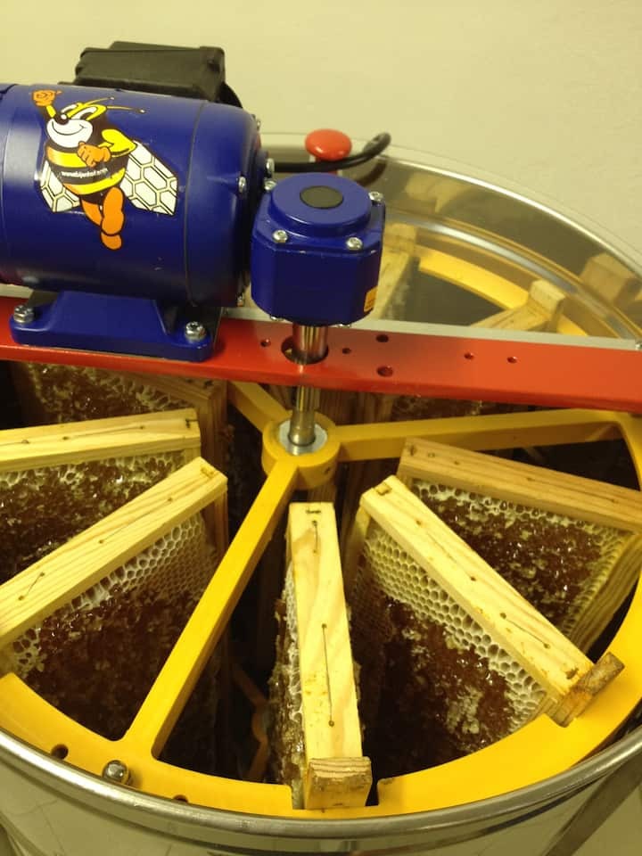 Extraction du miel par centrifugation