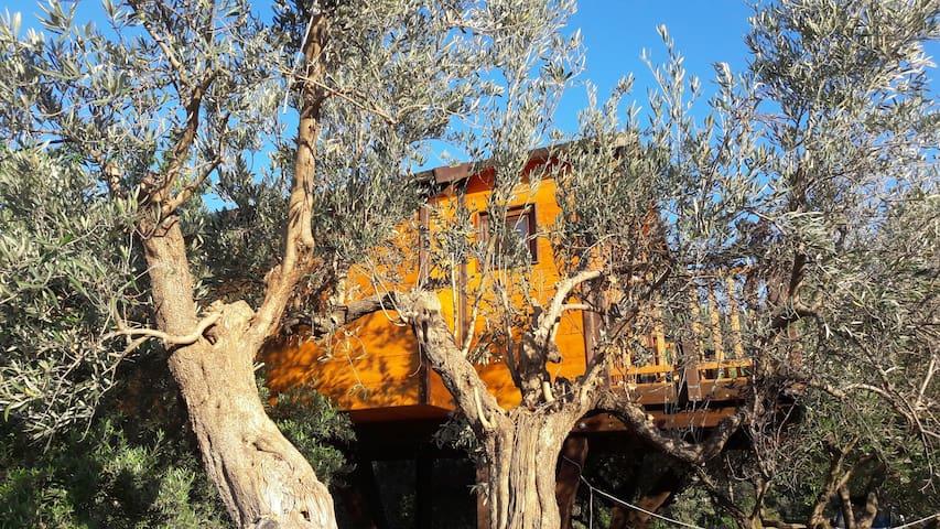 PALAZZO CONFORTI TREEHOUSE RESORT   ciliegio