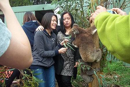 Joey Room: Fauna Australia - Lavers Hill - Jiné