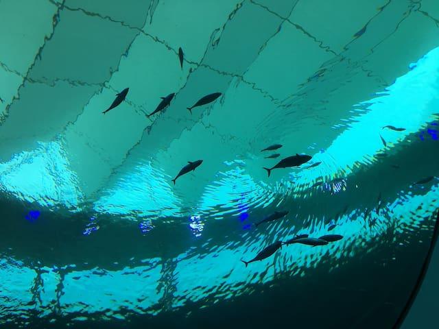 Frost Museum Aquarium