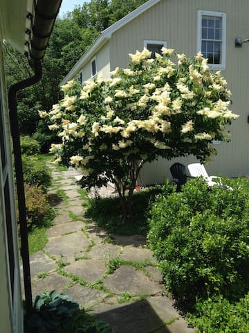 The tree lilac in full bloom with apartment behind.