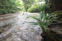 Río termales.