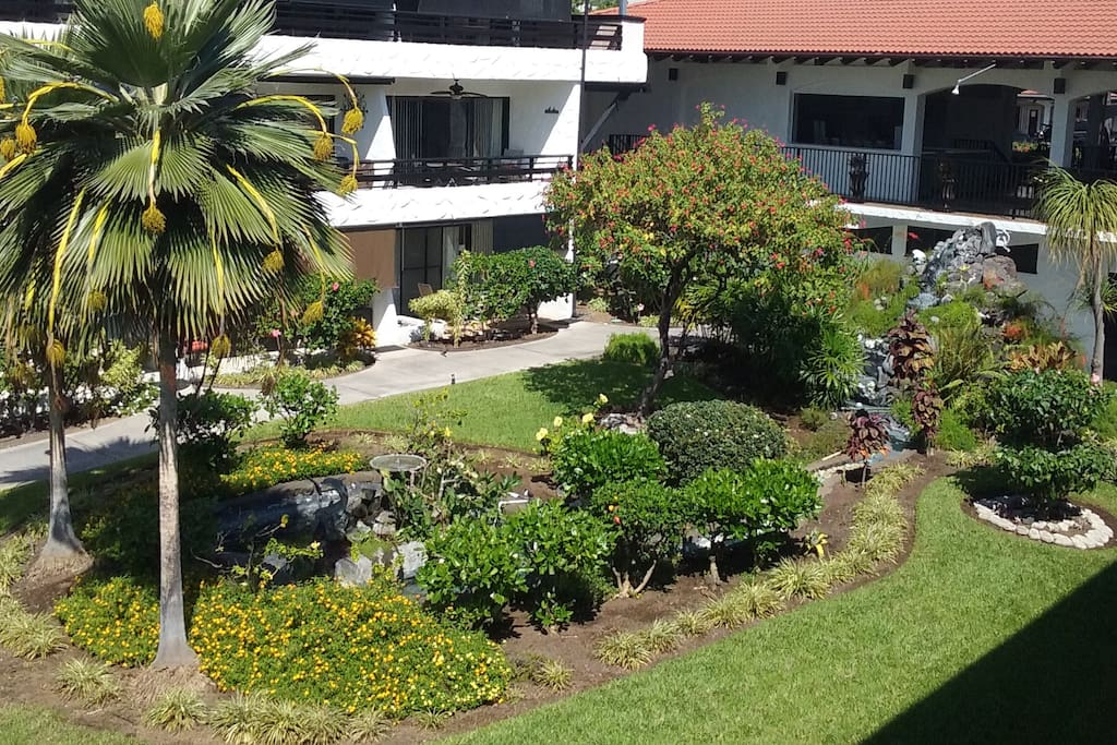Our water feature attracts many birds - view from my lanai