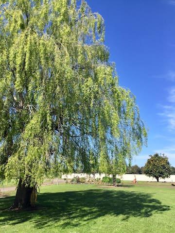 Willow tree garden
