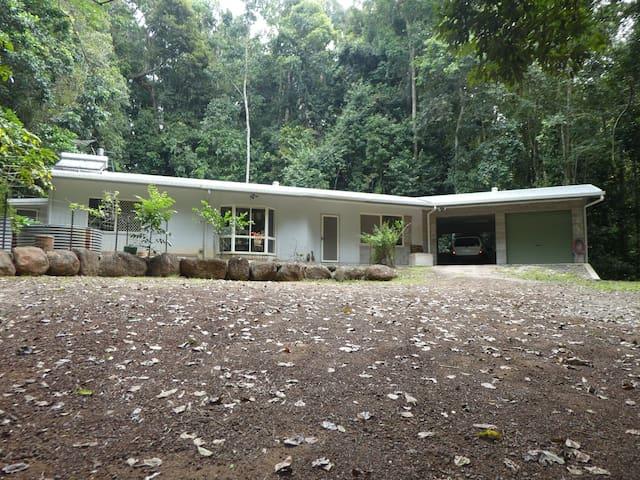 Malanda rain forest tree kanagroo
