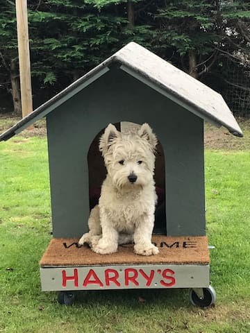 Harry showing off his kennel!