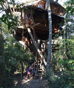 Casa da Árvore - Vale do Capão - Palmeiras