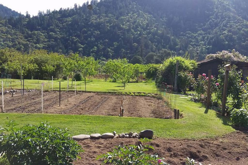 Organic vegetable gardens abound!