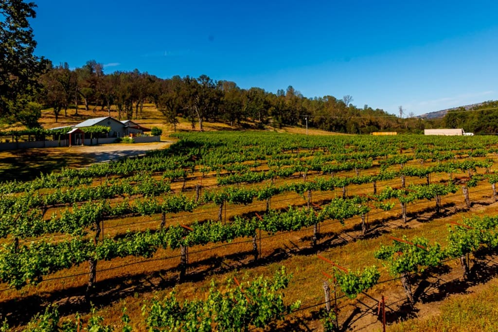 From 1,000 Vines vineyard, looking at the house