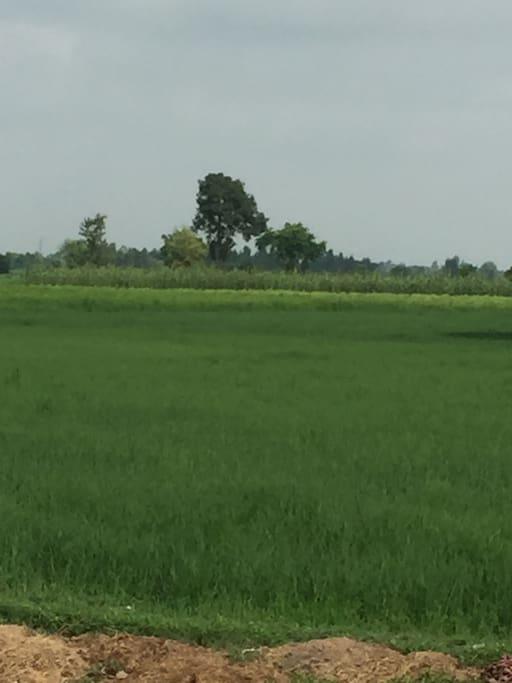 Greener around Lahore