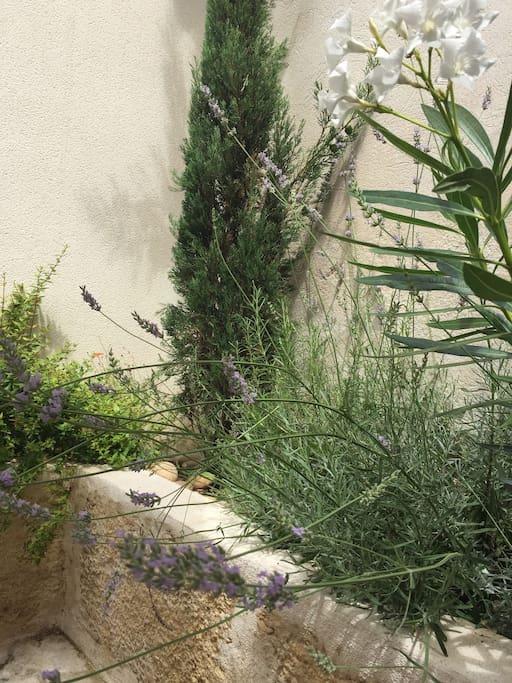Essences de Provence : lavandes, romarin, cyprès...