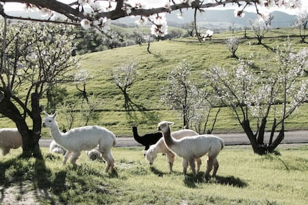 Alpaca Ranch With Breathtaking View - 파소 로블레스(Paso Robles)
