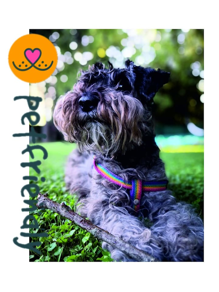 Somos Pet Friendly, tu mascota sera bienvenida !! Leer instructivo al respecto.