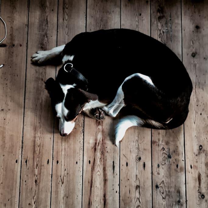 Entspannung (Haushund Ben)