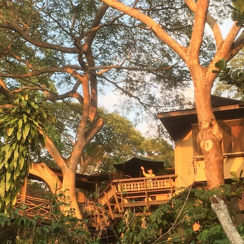 "Your private ohana in a ""tree house"""