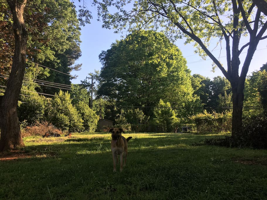 Over an half an acre (fenced) for animals to run