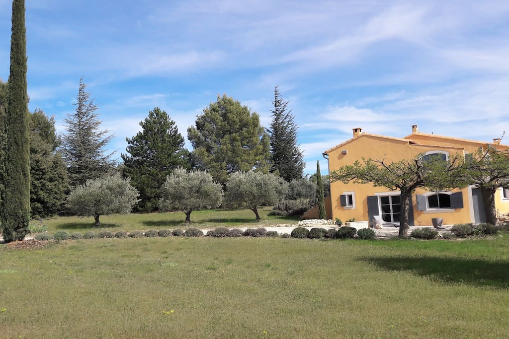 Maison et oliviers.
