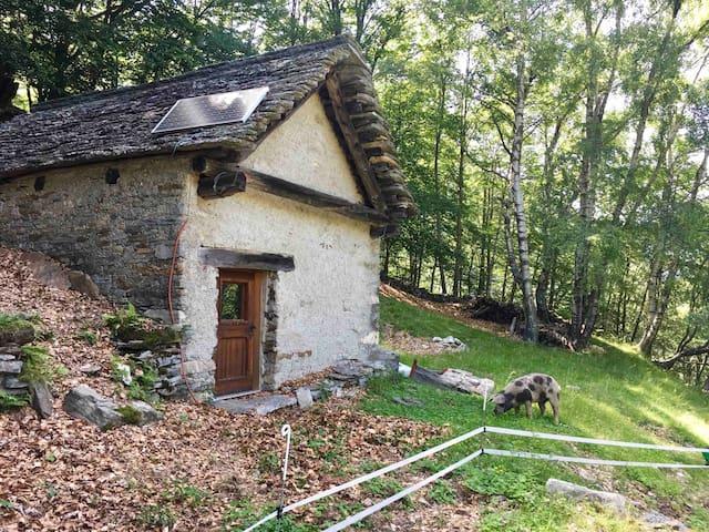 Casa Heidi auf der Alpe Soladino mit DU/WC