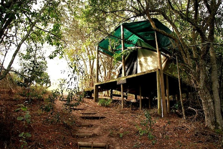 Into the woods - glamping tent