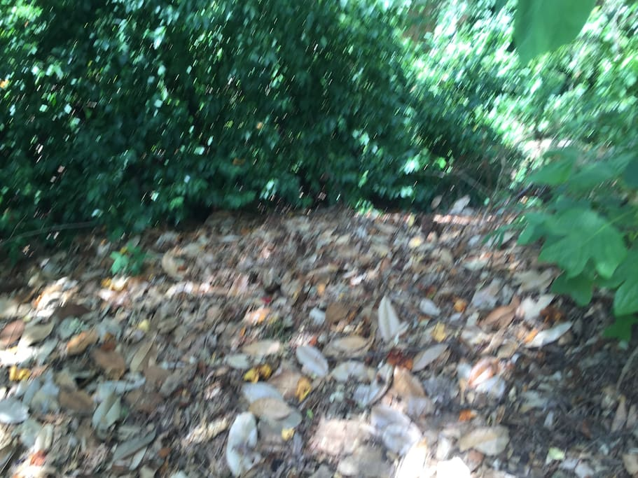 Primitive camping - natural setting - pile of leaves