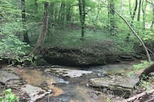 A section of the creek.