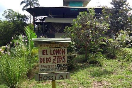 El lomon de los zipas Amazónicos