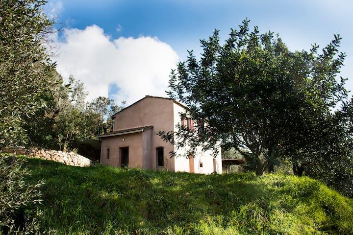 Azienda agricola biologica a Castagneto Carducci