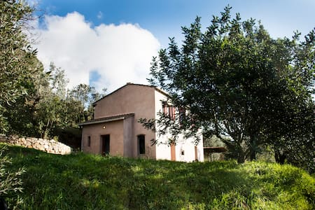 Organic farm in the hills in Castagneto Carducci
