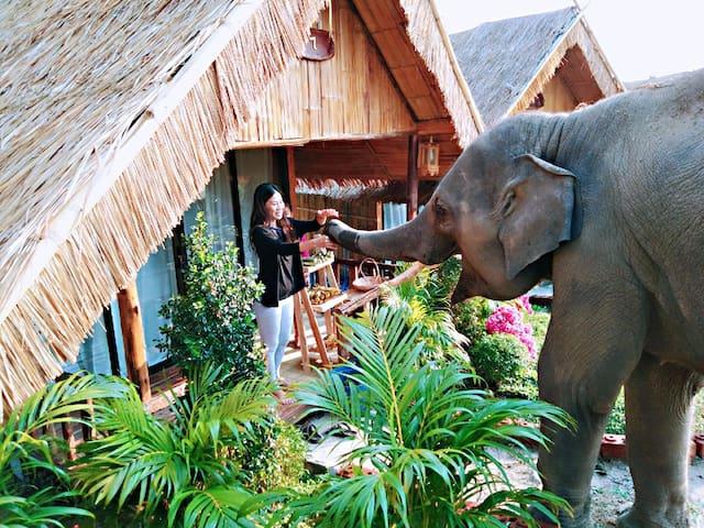 大象民宿三号 Maewang  Gold elephant park