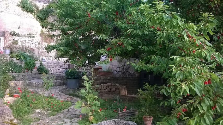 le cerisier en fruits