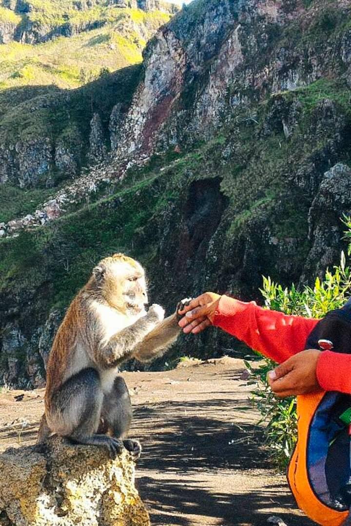 I during feeding monkey on Mt. Batur