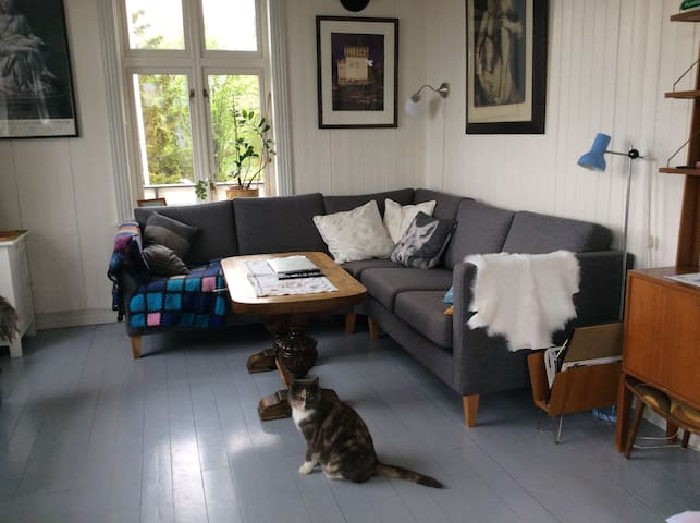 Living room and our cat; Esmeralda