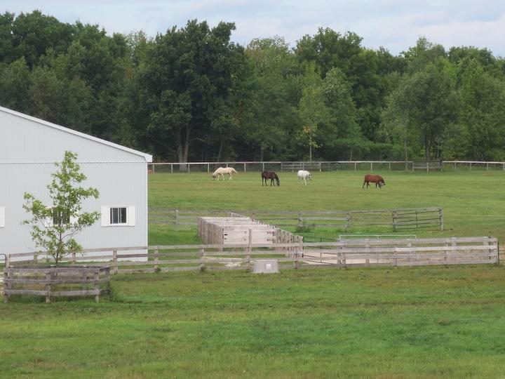 Peaceful Retreat on Horse Farm near Alliston