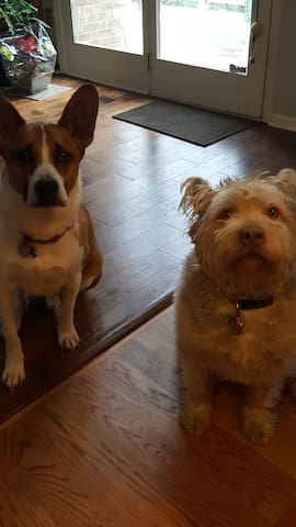 Our sweet & friendly dogs
