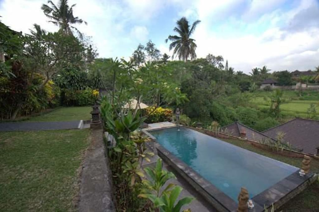 Beautiful view of rice field from pool.