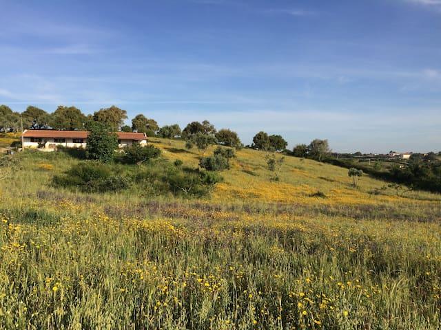 Rolling hills near the sea - Cercal do Alentejo