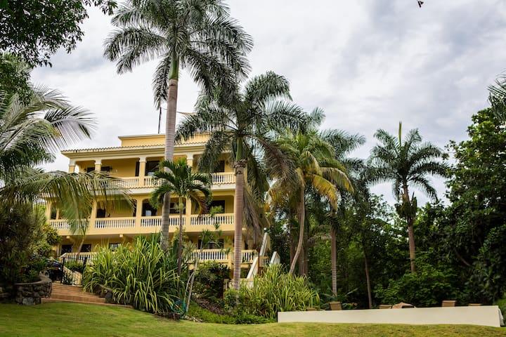 Butia Palm @ Casa D'Palma