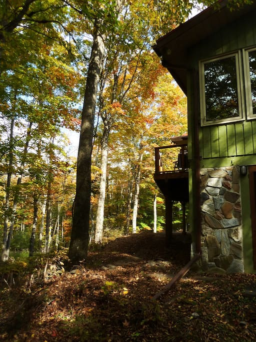 Tree house in the maples