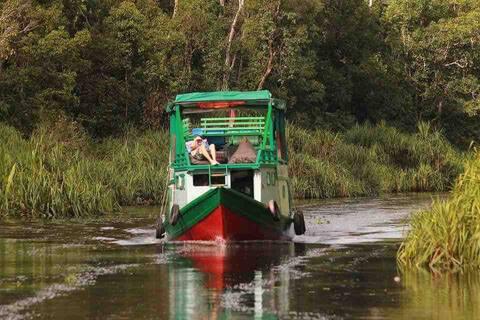 Orangutan Nest Houseboat Tanjung Puting