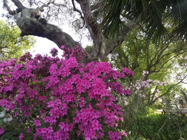 Peaceful Getaway Close to Spring Bayou