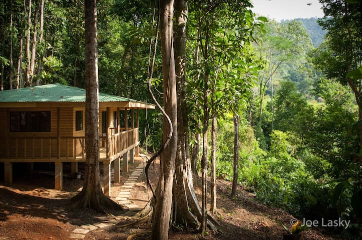 Secluded jungle cabin in primary rain forest - Tres Rios - Srub
