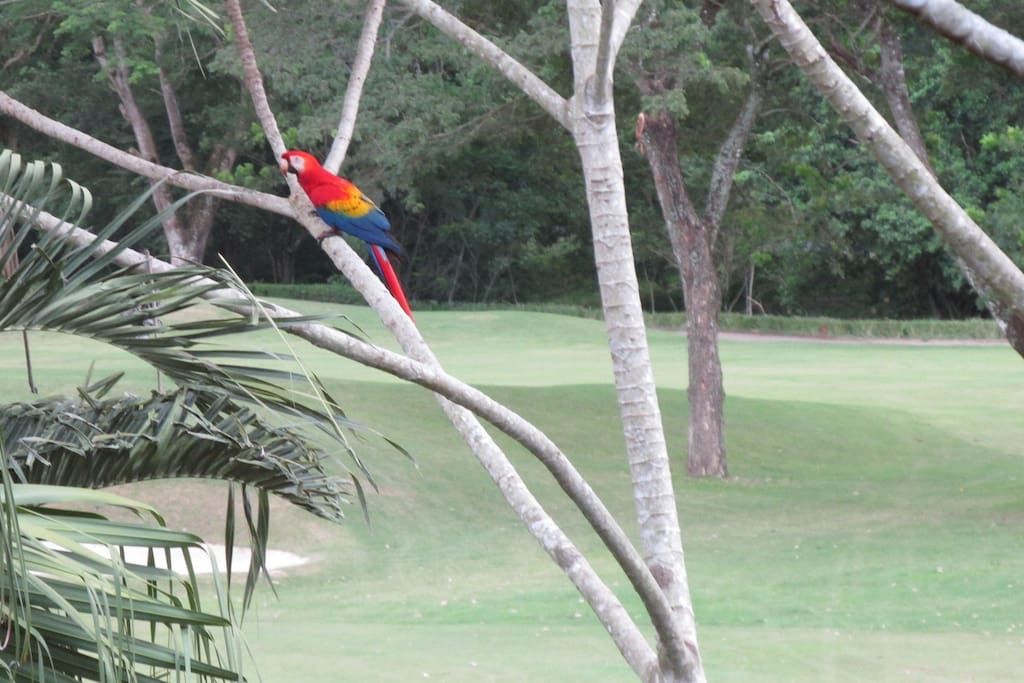 Macaw from our patio