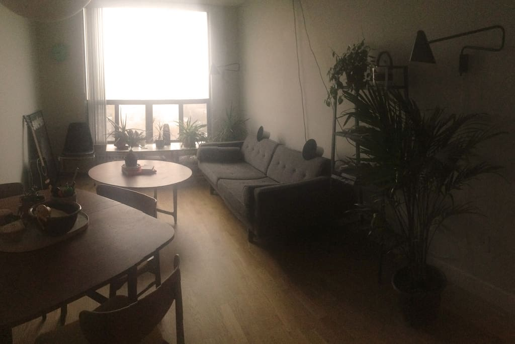 A big couch and plenty of plants to keep you company