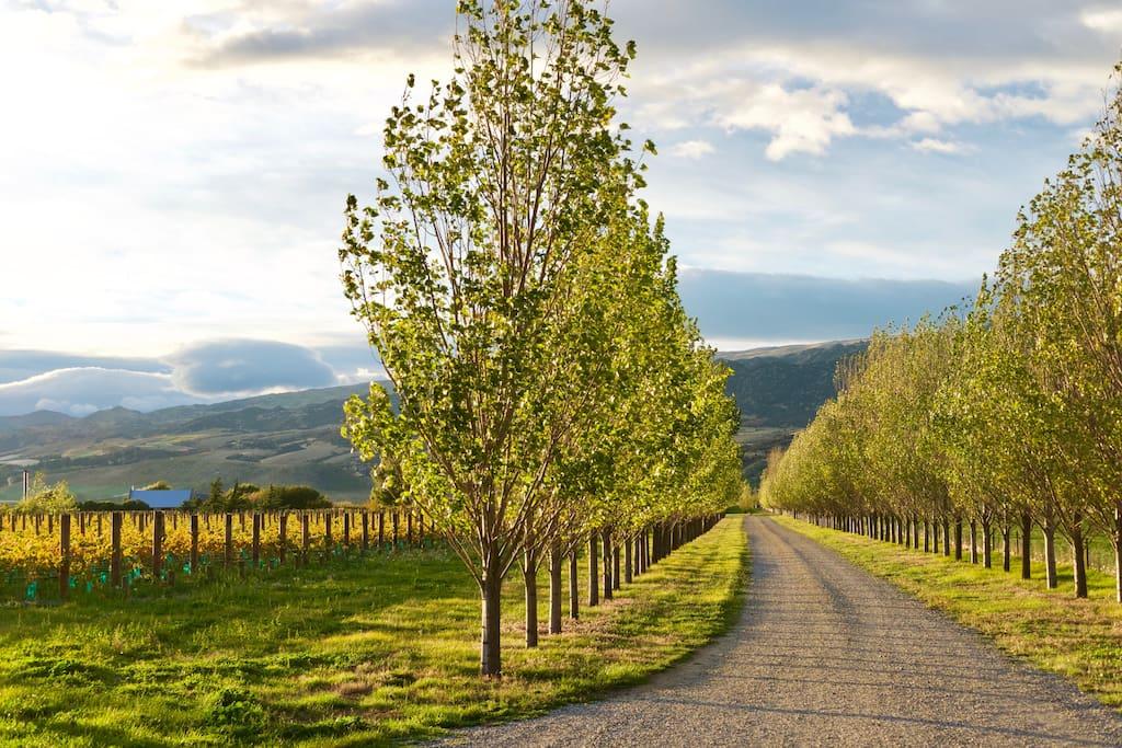 Driveway into Kopuwai Delta Vineyard