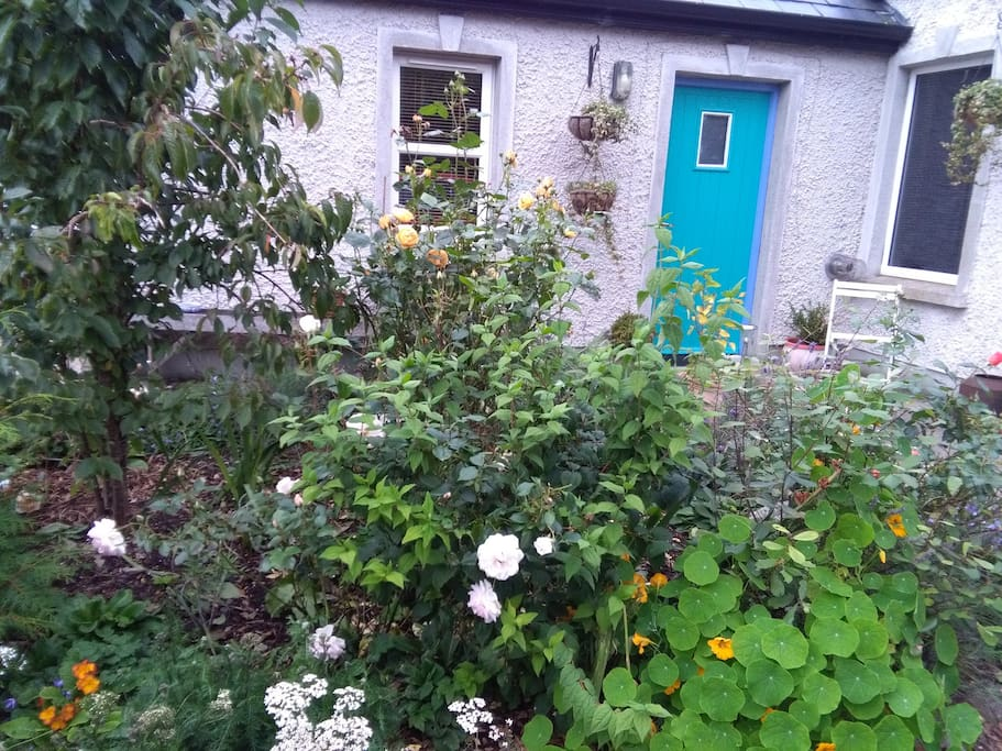 Guest House garden in September