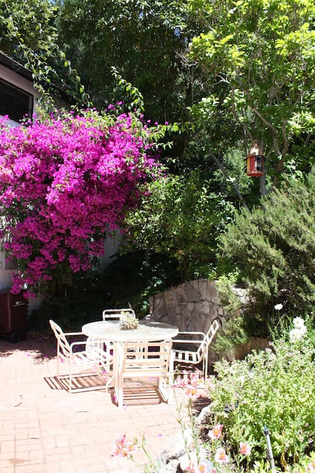 The patio with Bougainvillea in bloom