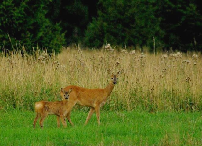 Resident visitors - Don't be surprised if you see Deers